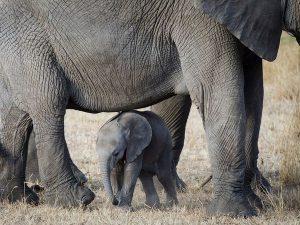 baby-elephant-serengeti_55571_600x450