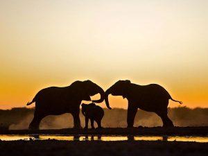 elephant-trio-etosha-national-park_48281_600x450