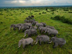elephants-queen-elizabeth-park-sartore_46569_600x450