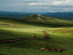 horses-mongolia-leong_49122_600x450
