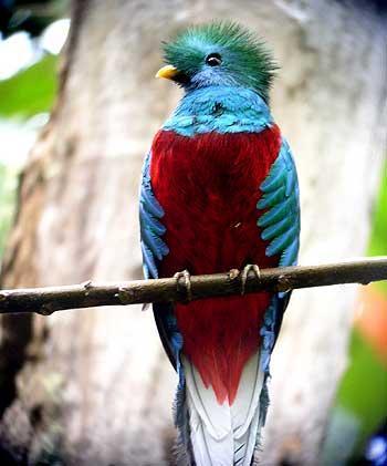 ER_ElOlvido Quetzal