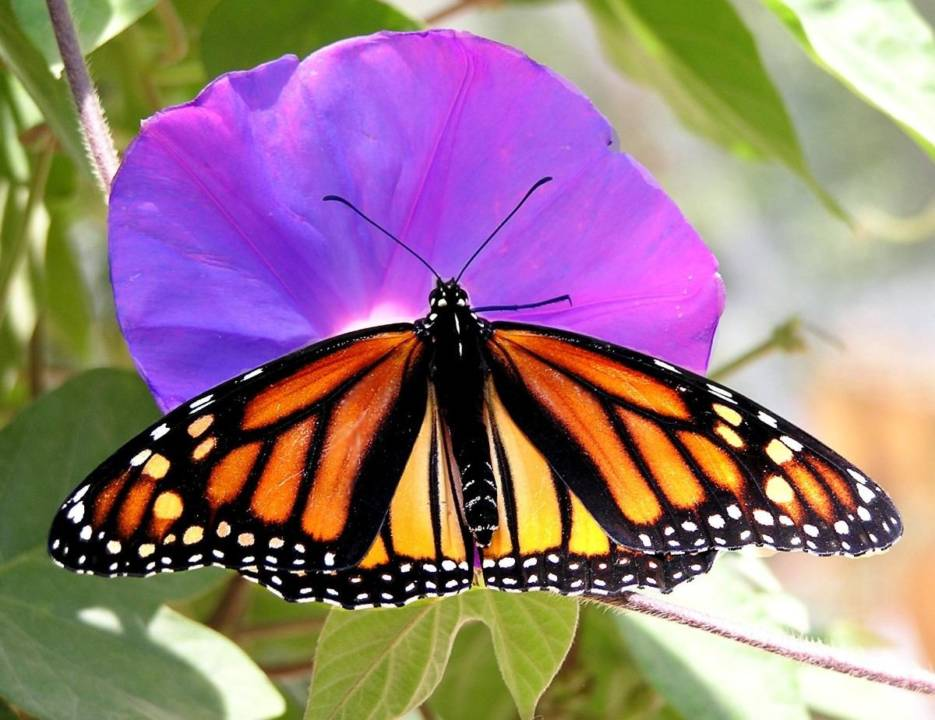 The Biosphere Reserve Monarch Butterfly Movement in Mexico