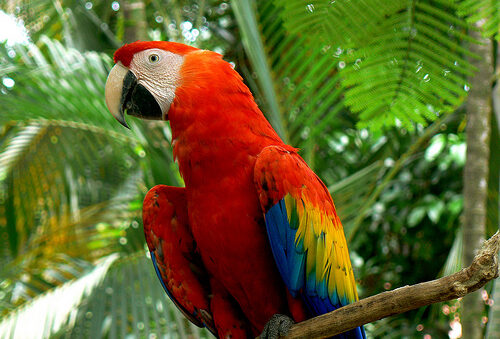The macaw with beautiful feathers