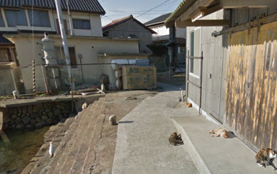 The Cat island, Aoshima Japan