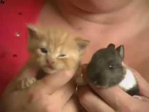 Cat Adopts Baby Rabbit video has 8 million viewers!