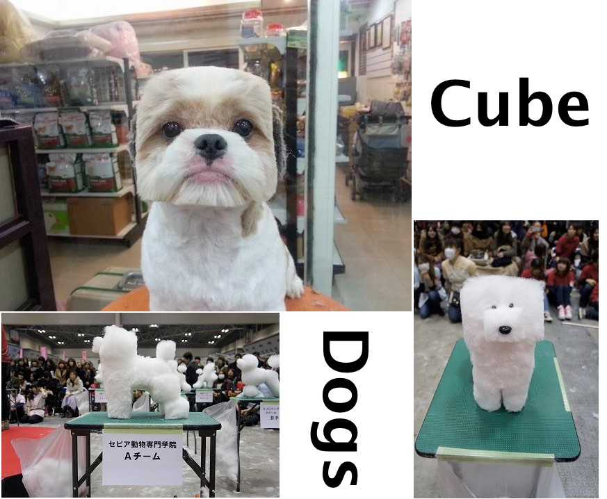 Shaving Dogs Into Cubes seems to have become A New Japanese Thing