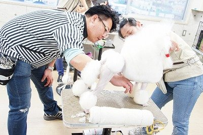 Dog Shaping