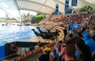 Here is our Interesting Review of Loro Parque on Tenerife