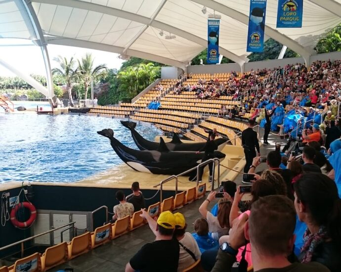 Here is our Review of Loro Parque on Tenerife
