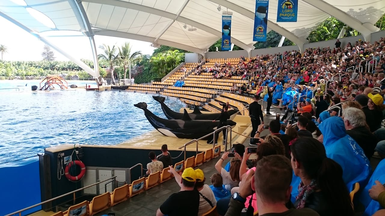 Here is our Review of Loro Parque on Tenerife - Loro Parque Orca show