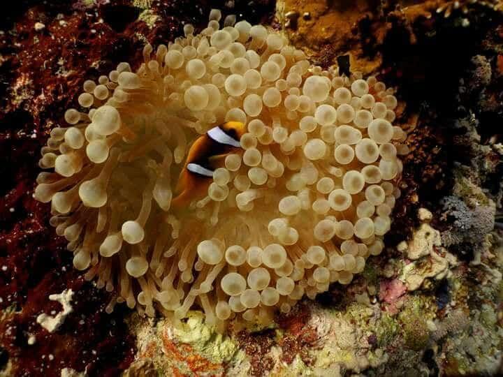 Explore the Amazing Diving Experience at Sri Lanka 5