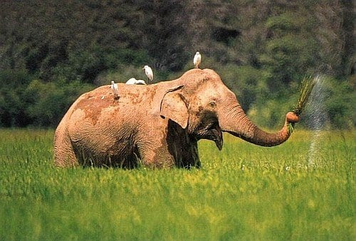 Get to Know the Amazing Natural National Parks in Sri Lanka