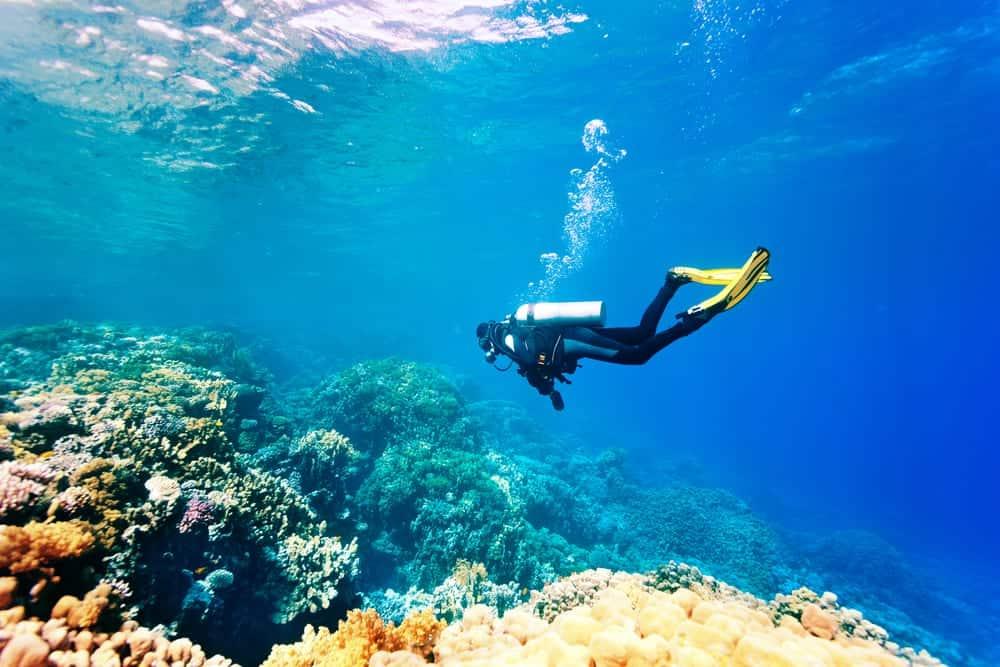 Explore the Amazing Diving Experience at Sri Lanka 3