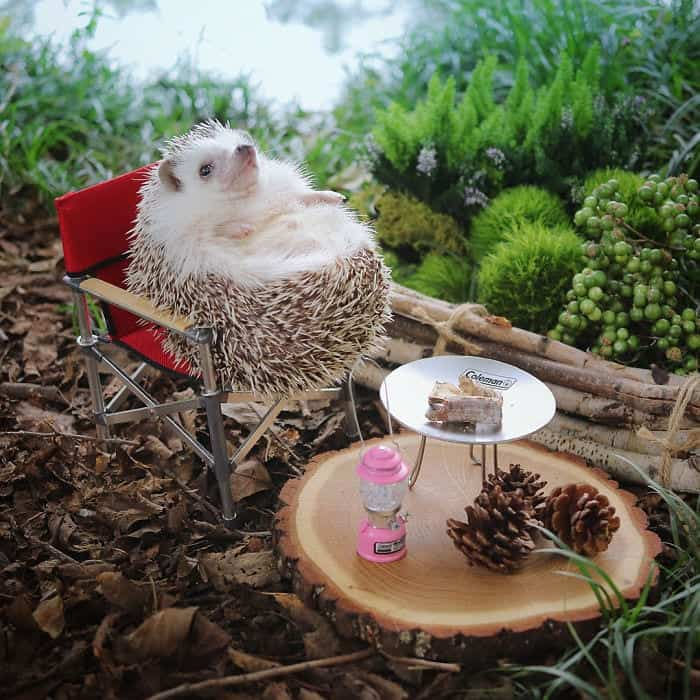 Tiny Hedgehog