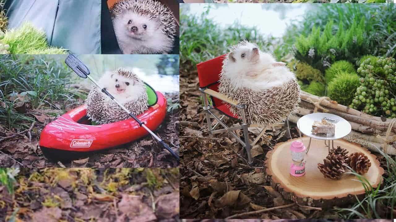 tiny hedgehog article