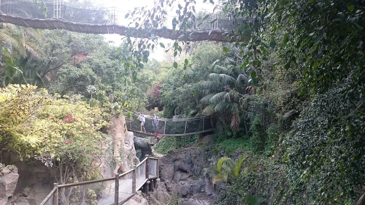 Animals and Birds to Explore at Jungle Park on Tenerife