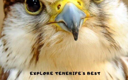 Jungle Park review – explore the best falcon show of Tenerife