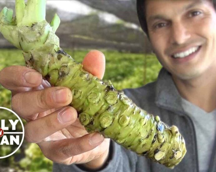 Understand Everything about the Green Spicy Sushi part in this Wasabi Guide