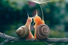 Honeymoon for Snails