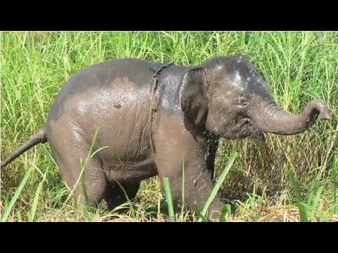 baby elephants facts