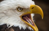 3 Best White-tailed Eagle Bird Experiences in Norway