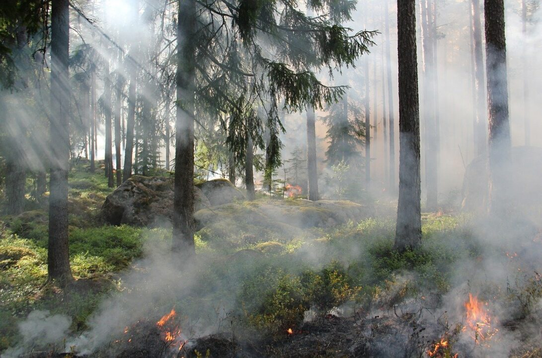 What to Do when Forest Fires happen? Backpackers Tips included! 1