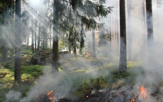 What to Do when Forest Fires happen? Backpackers Tips included!