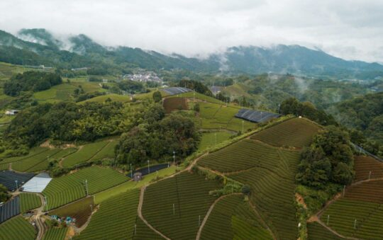 7 health benefits of Matcha Tea for travelers
